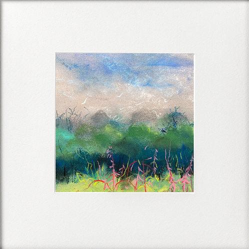 Seasons - Late Summer Glimpse of Rosebay Willowherb