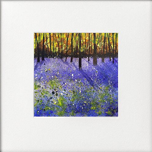 Seasons - Early summer Sunlit Bluebells