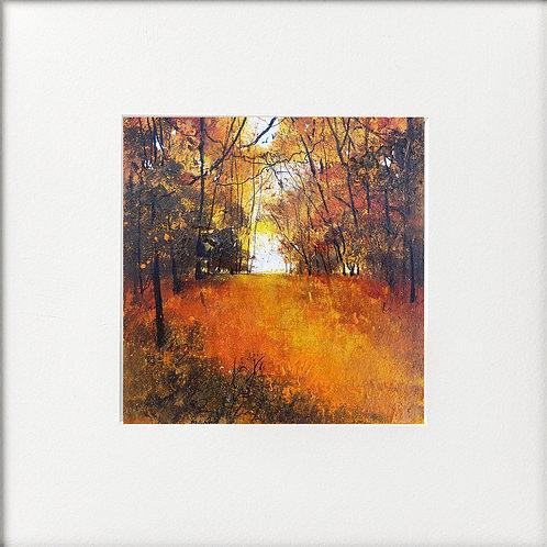 Seasons - Autumn Burst of colour