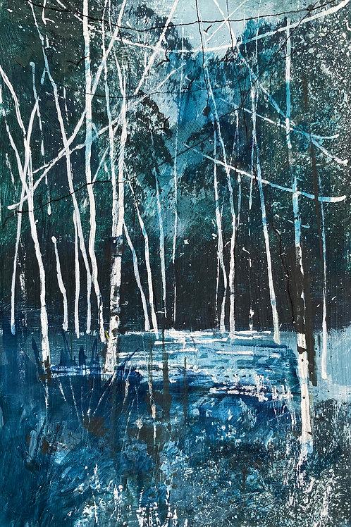 Blue Woods Silver Birches