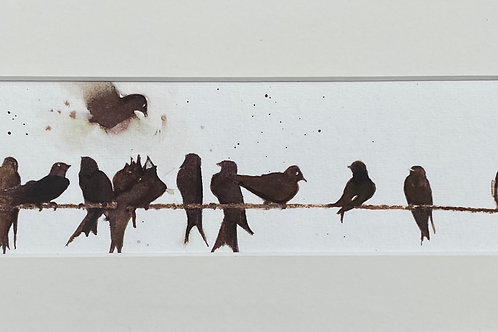 Row of Swallows on a Wire