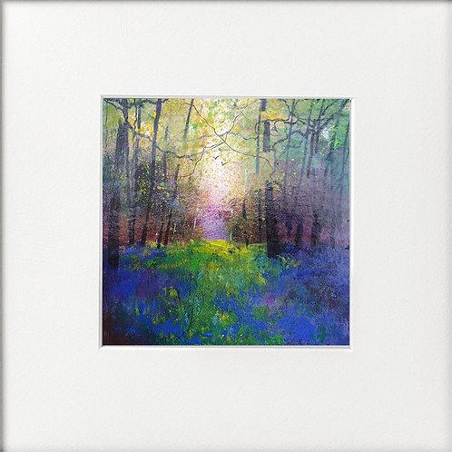 Seasons - Misty Bluebell Woods