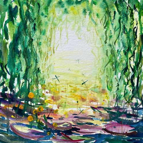 Waterlily Reflections Damsel Flies