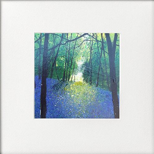 Seasons - Early Summer Carpet of Bluebells