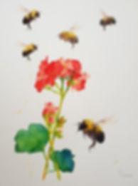 bees geranium.jpg