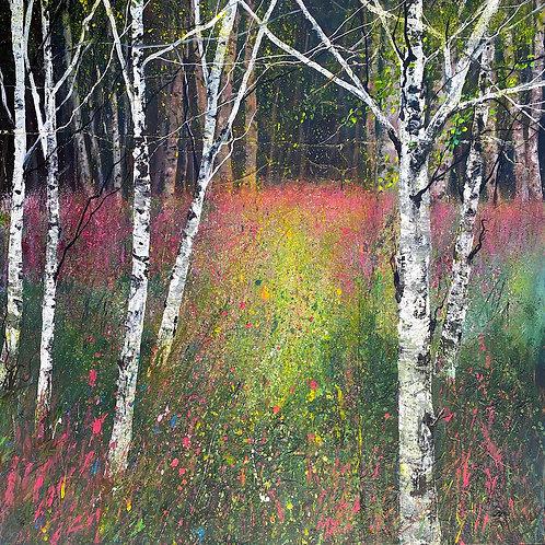 Silver Birch Wood Wildflowers