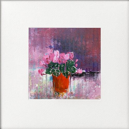 Cyclamen in a pot pink tones