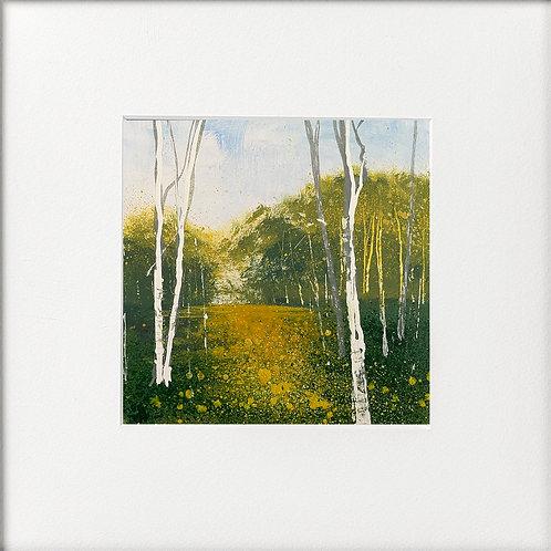 Summer Evening Sun Silver Birches