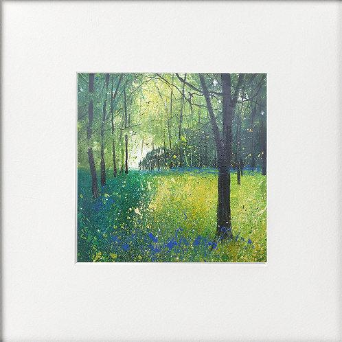 Seasons - Early Summer Last Few Bluebells
