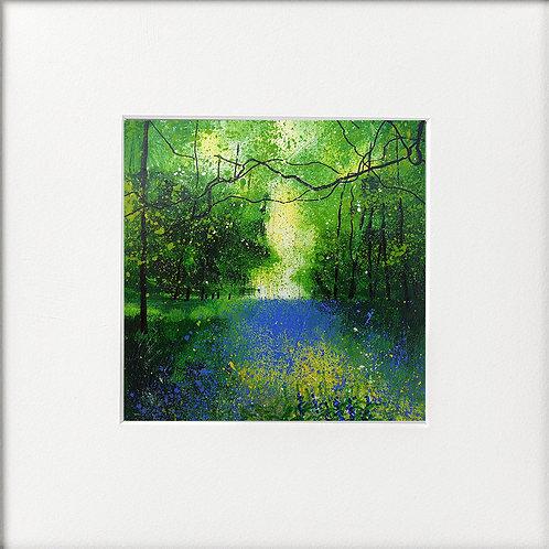 Seasons -Spring Tree Canopy Bluebells