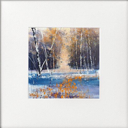 Seasons - Winter Sun through trees