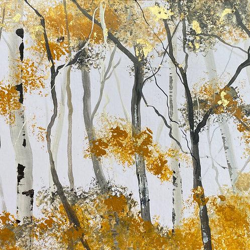Warm Silver Birch Trunks 2