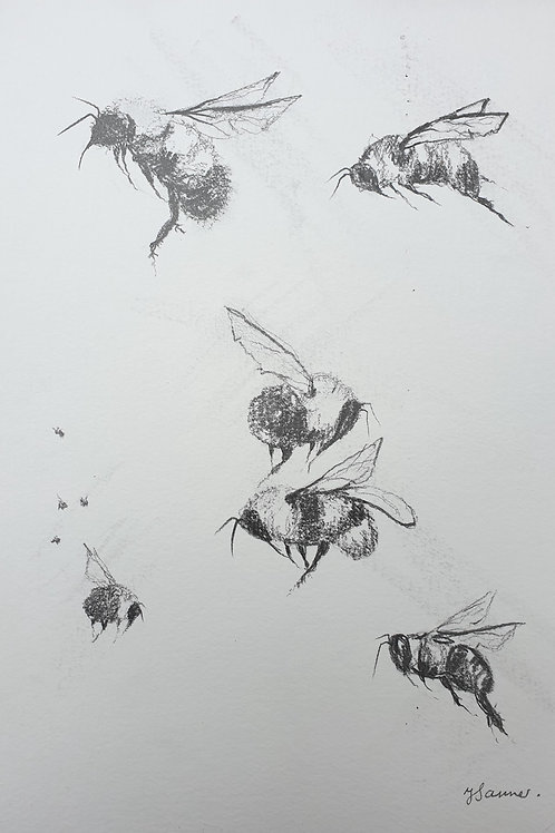 Bees in Motion