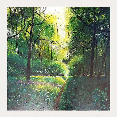 Tranquil Woodland Pathway