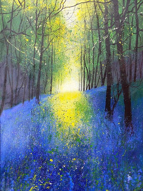 Spring Light Across Bluebell Woods