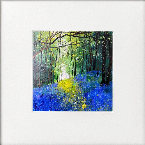 Seasons - Mid Spring Bluebell Bank