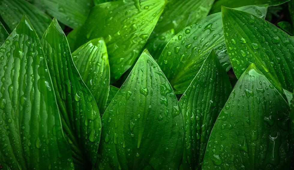 leaf-1353683_1920.jpg