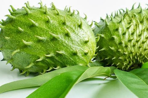 Graviola SourSop 150 Tea Bags