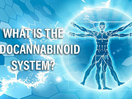 What is the Endocannabinoid System and How Does CBD Affect It?