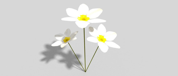 low_poly_flower_3d_model_c4d_max_obj_fbx