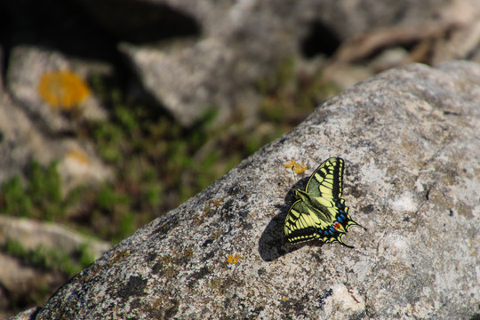 An Butterfly on a rock