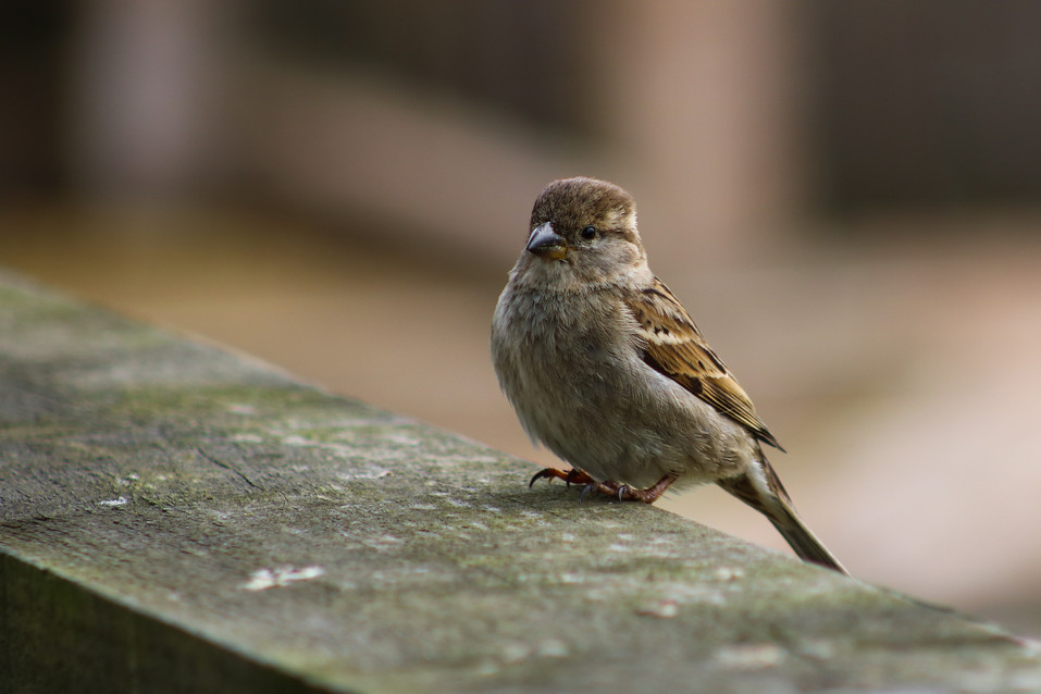 Small Bird on Fence