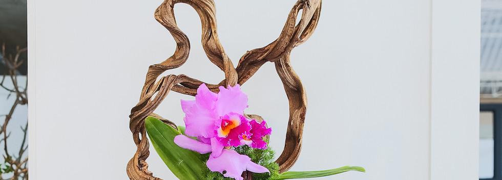 Composição com cipó e Cattleya