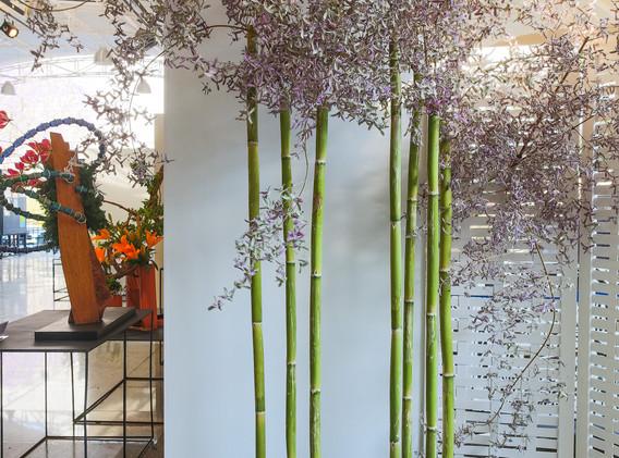 Bambú, congéia.jpg