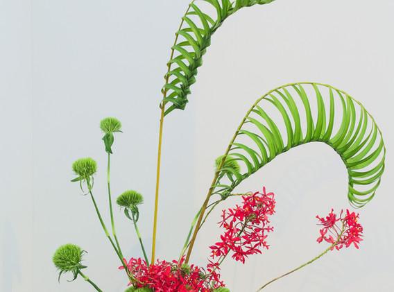 Areca bambú, green-ball e epidendro