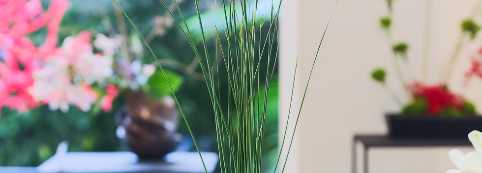 Cavalinha, miniflores e filodendro.jpg