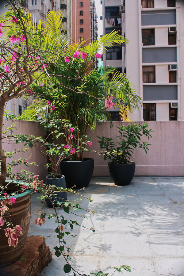 Island rooftop bambou palm corner.JPG