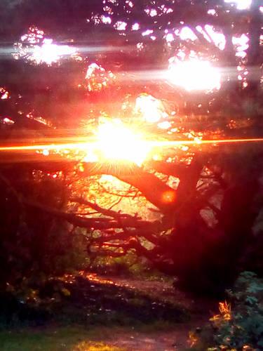 Under the pine tree Light
