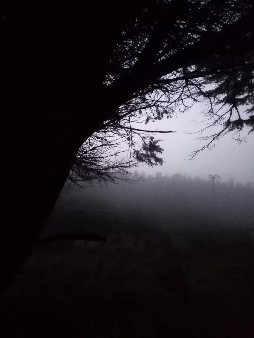 Mystic mist