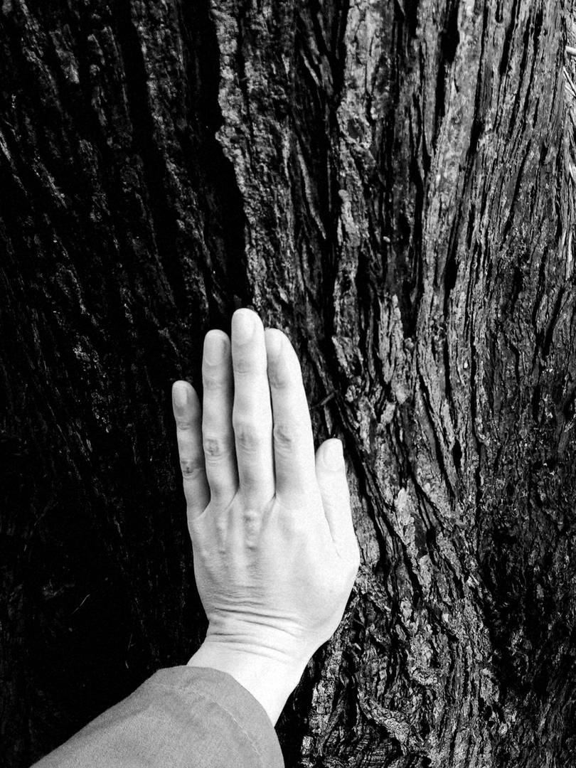 deep roots Cedar