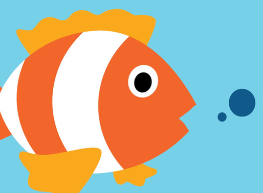 Fish Autumn 2019 Blog Update