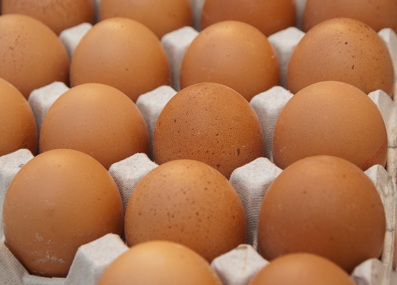 Cracking Eggs - The Fountains Federation 8