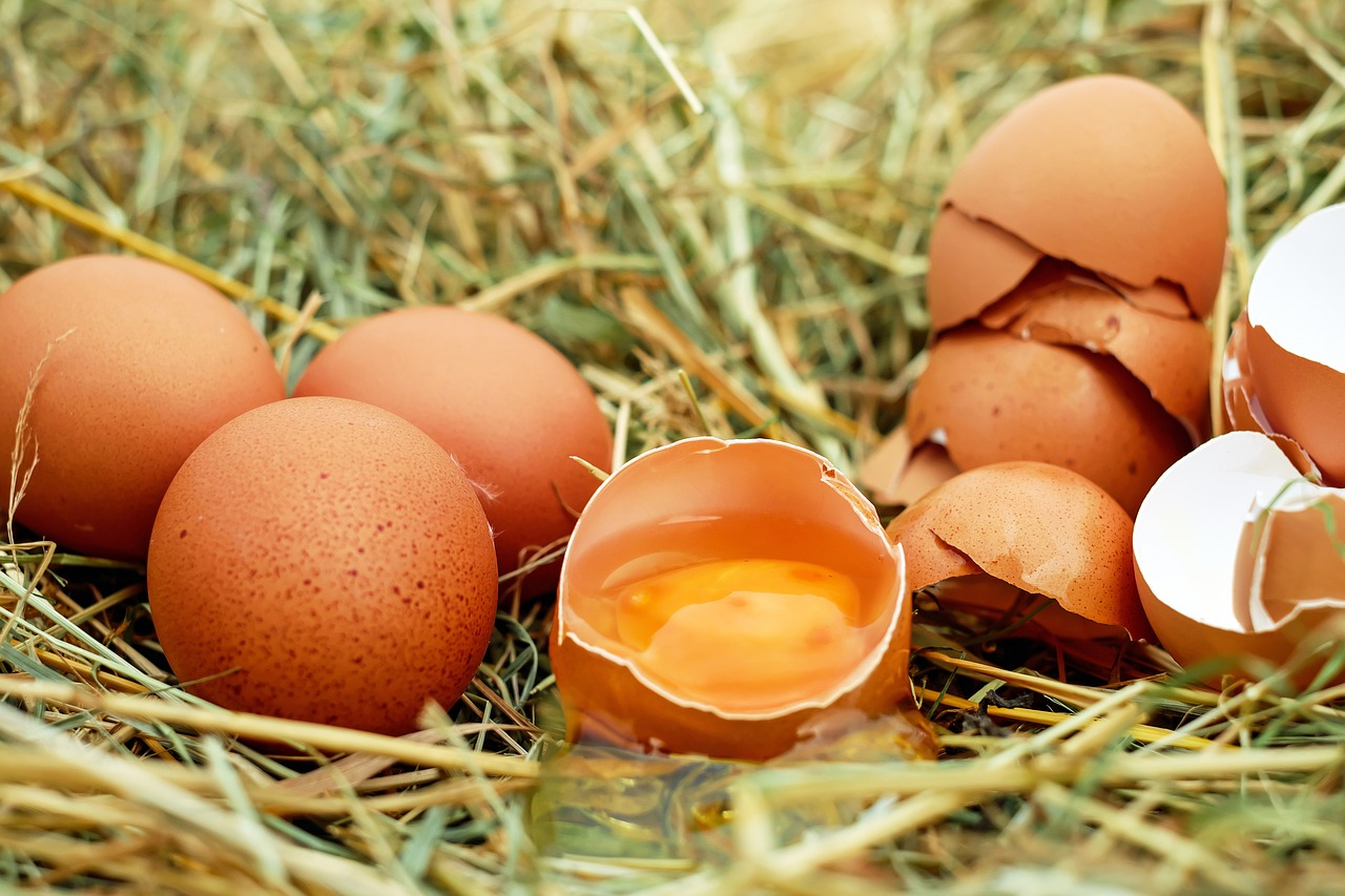 Cracking Eggs - The Fountains Federation 5