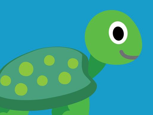 Turtles September 2019 Blog Update