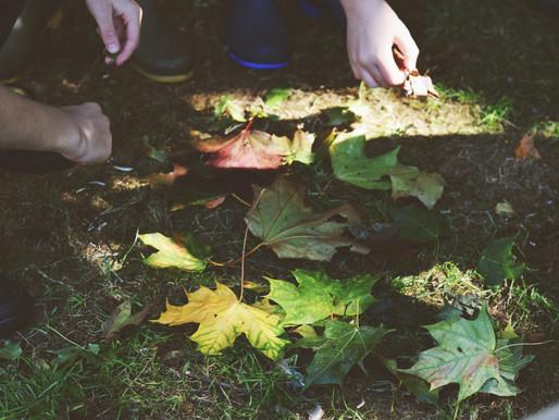 Forest School Autumn 2 Blog Update