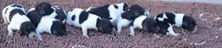442021Dots puppies