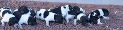 442021Dots puppies.JPG2