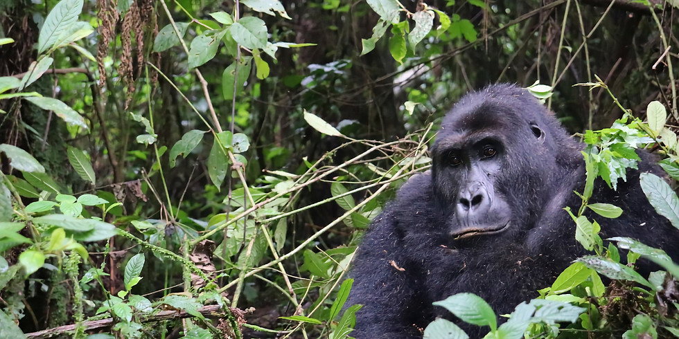Biodiversity Conservation in DR Congo: challenges and opportunities