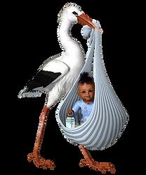 stork-2196818_640.png