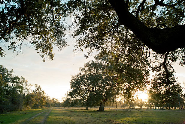 01 Matagorda County ranch.jpg