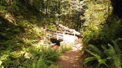NU_Trail_Optimized