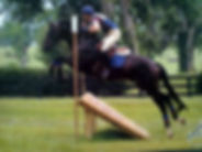 Click image to see our horses