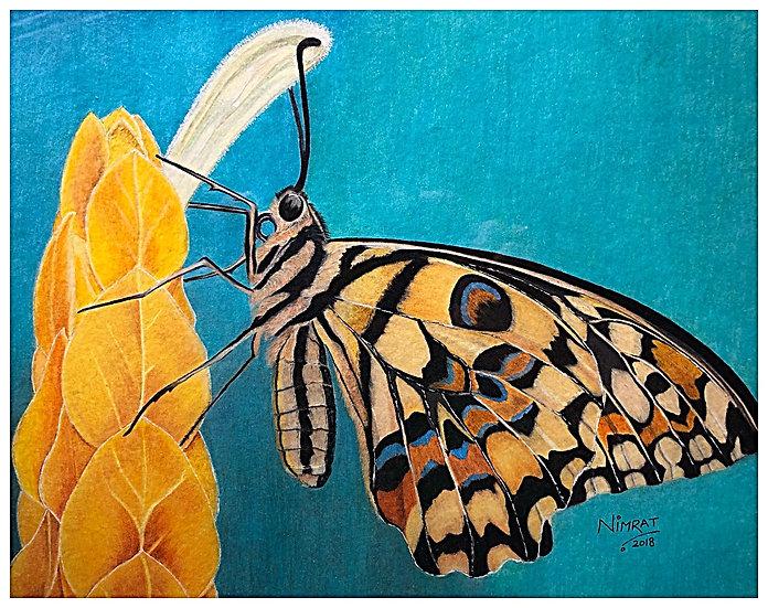 Butter Wings