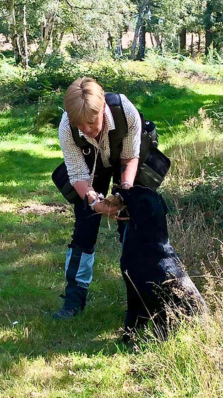 Wrencourt - Denise Purchase and black Labrador Retriever in dog training