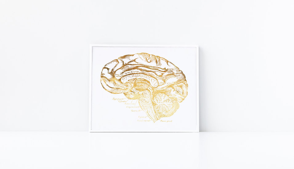 Human Brain Real Foil Vintage Anatomical Doctor Print