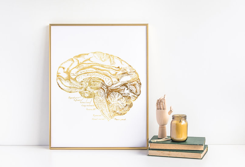 Brain Real Foil Anatomical Print